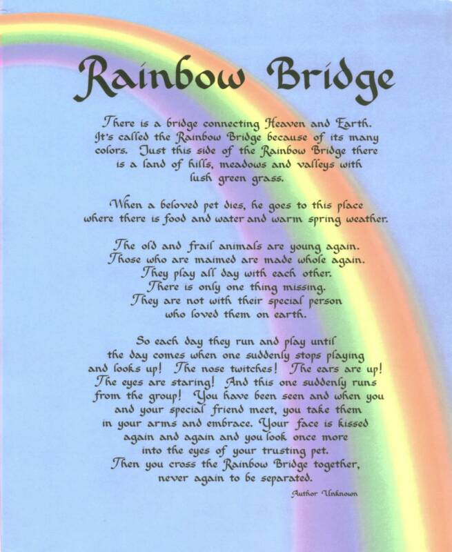 rainbowbridge_op_655x800.jpg